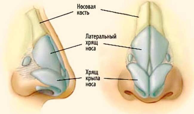 Александровская стоматологическая поликлиника терешковой