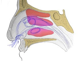 Хирургия носовых раковин